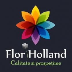 Flori Holland Timisoara:Flori Holland En Gros - Violette Boutique de Fleurs, Concept Store, En gros flori Olanda - Buchete si aranjamente de lux Private & Business